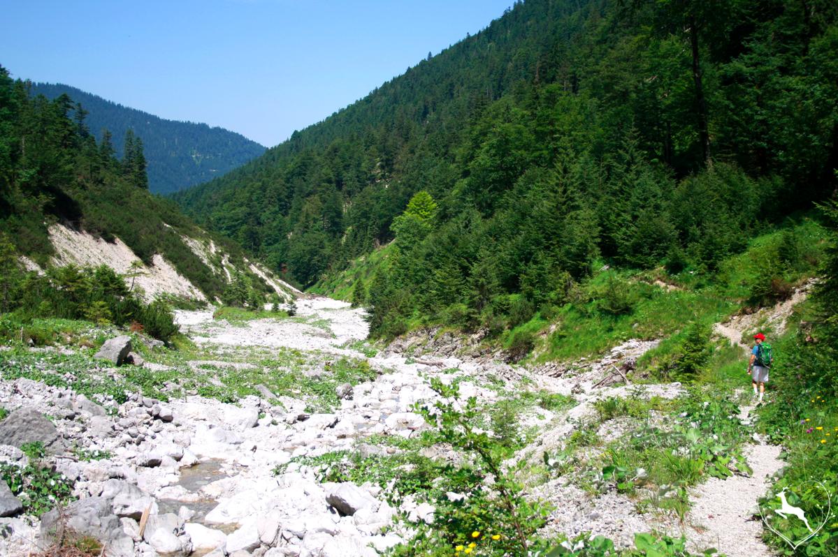 Wanderung durchs Krottenbachtal