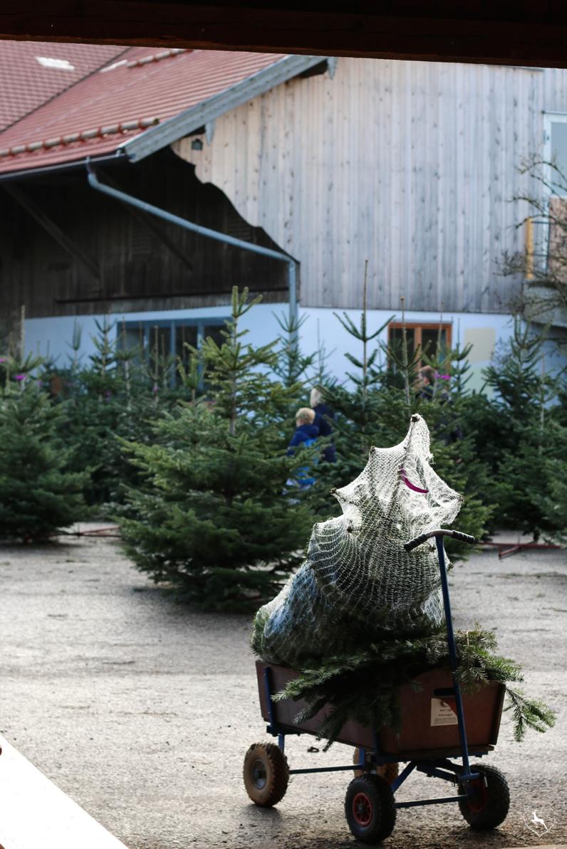 Christbaum aus Bayern