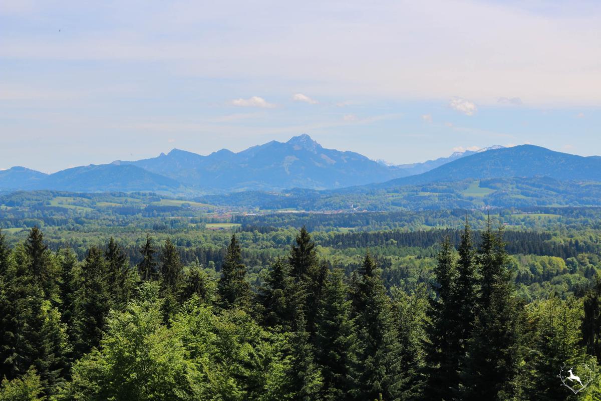 Taubenberg